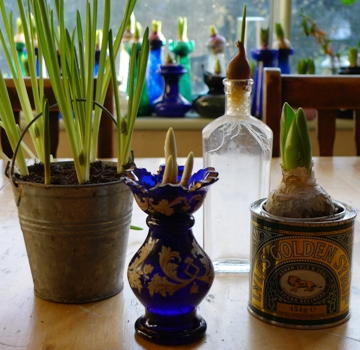 different vases and containers for bulbs