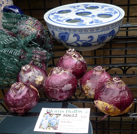 Bloms Delft Blue hyacinth bulbs