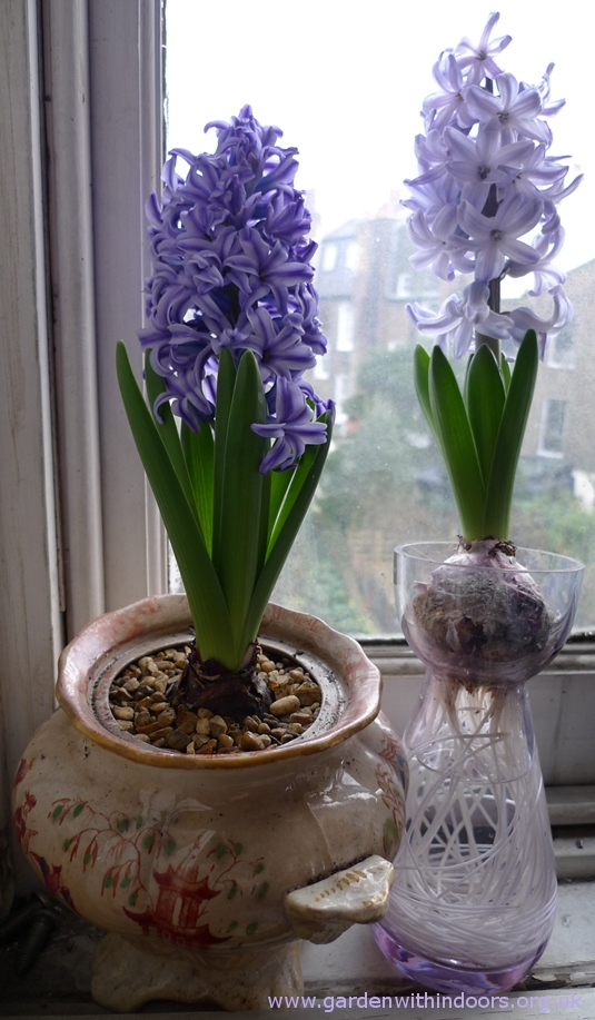 Dartington neodymium hyacinth vase