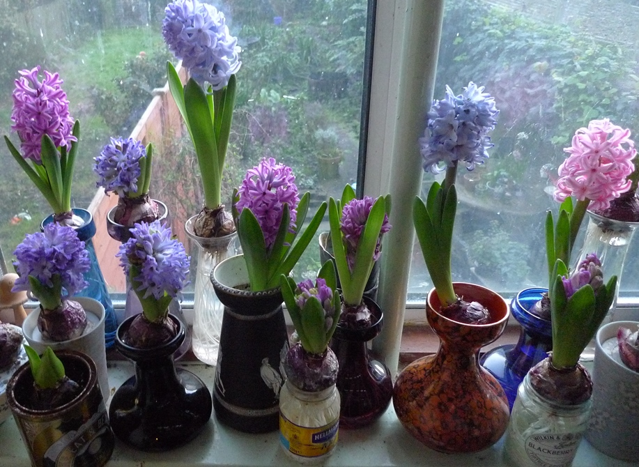 Garden Withindoors There Is Nothing Half So Much Worth Doing As Messing About With Bulbs