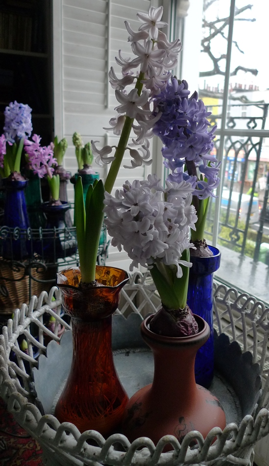 double-stemmed hyacinth
