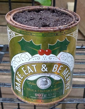 golden syrup tin planted with tulips