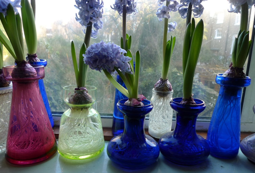 Next Wave Of Hyacinths Garden Withindoors
