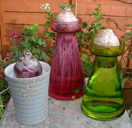 glassroots hyacinth vases