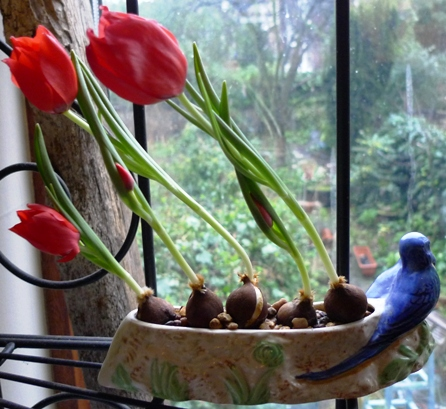 red tulips in Shorter and Son flower trough