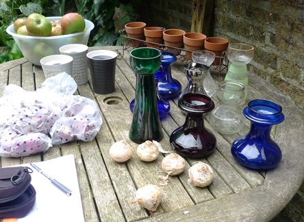 starting hyacinth bulbs in vases