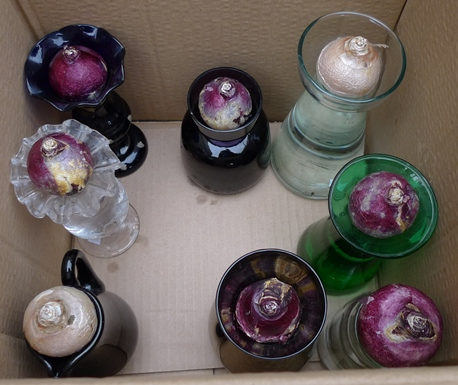 hyacinth vases with bulbs