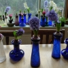 hyacinths in bloom in vases end of December