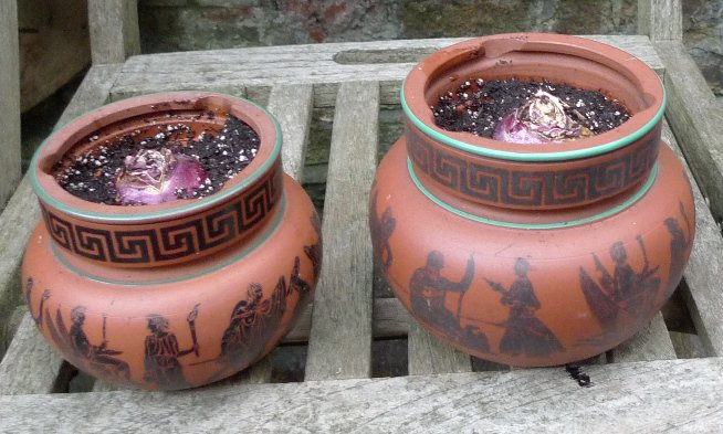 terracotta tobacco jars with hyacinth bulbs