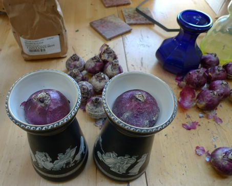 forcing hyacinths in vases