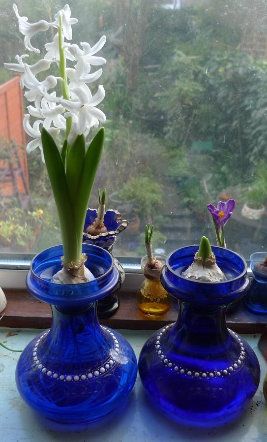 Hyacinth Bulb Forcing Vases Sevenstonesinc